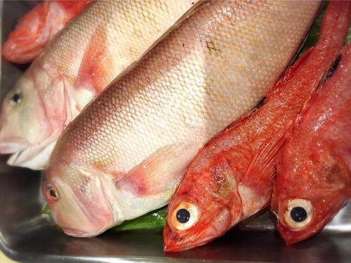 本日のオススメ鮮魚
